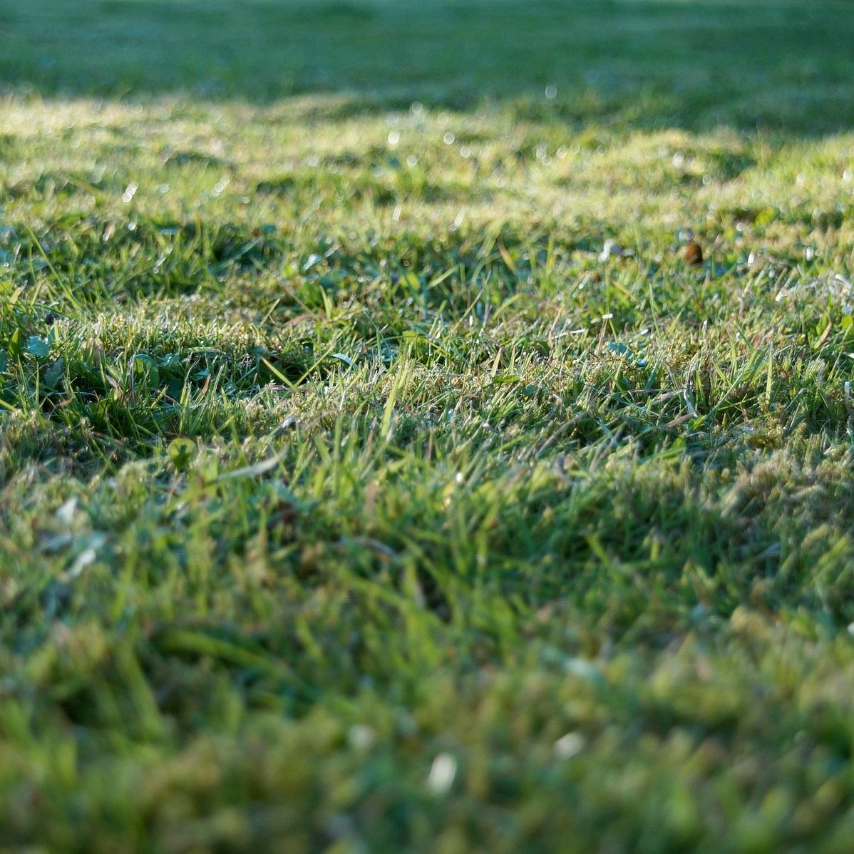 Grundstückskauf – was Sie unbedingt beachten sollten