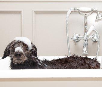 Darf der Vermieter Haustiere verbieten?