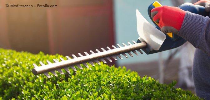 Nachbarrecht: Überhang von Pflanzen muss nicht regelmäßig geschnitten werden